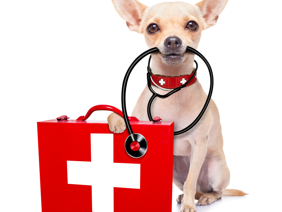 Common Pet Injuries and How To Deal With Them
